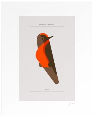 Josh Brill lumadessa bird 2